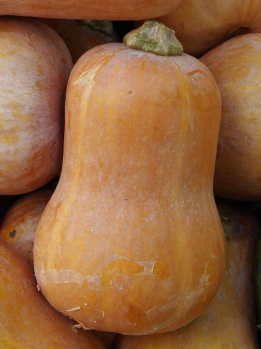 close up of honeynut squash